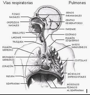 Cavidades del corazon yahoo dating 1