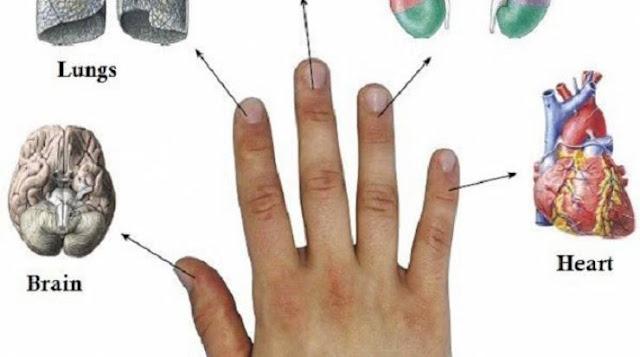 عالجوا أنفسكم من أي مرض تعانون منه بـ5 دقائق فقط! إليكم هذه الطريقة الصينية.. كل إصبع في يدك من جسمكم يرتبط بعضوين!