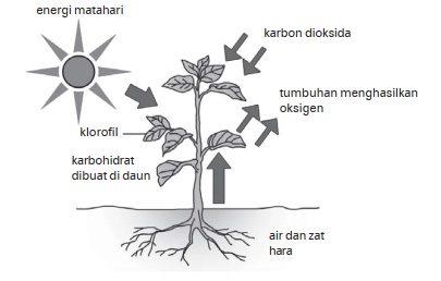 Proses fotosintesisi