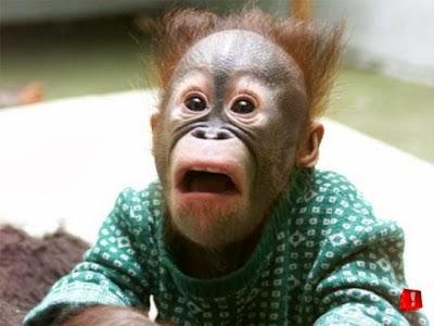 The Freak - GS Extraordinaire - GS aka Shocked Shocked Shocked Monkey - GS