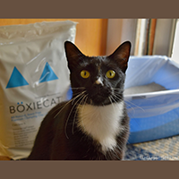 Boxiecat Cat Litter review