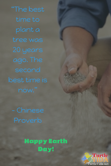 """The best time to plant a tree was 20 years ago. The second best time is now."" - Chinese Proverb"