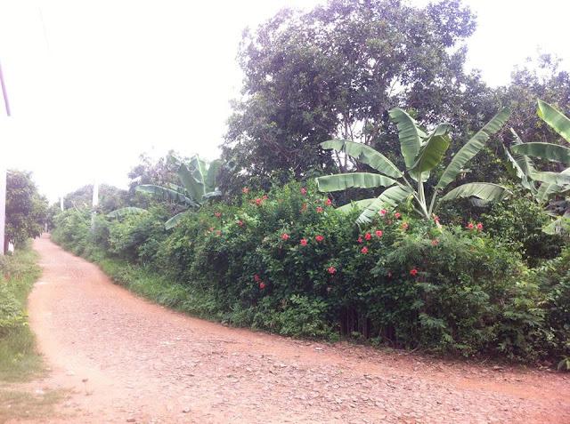 Bán đất vườn cây ăn trái chợ Phú Bình, Long Khánh 03