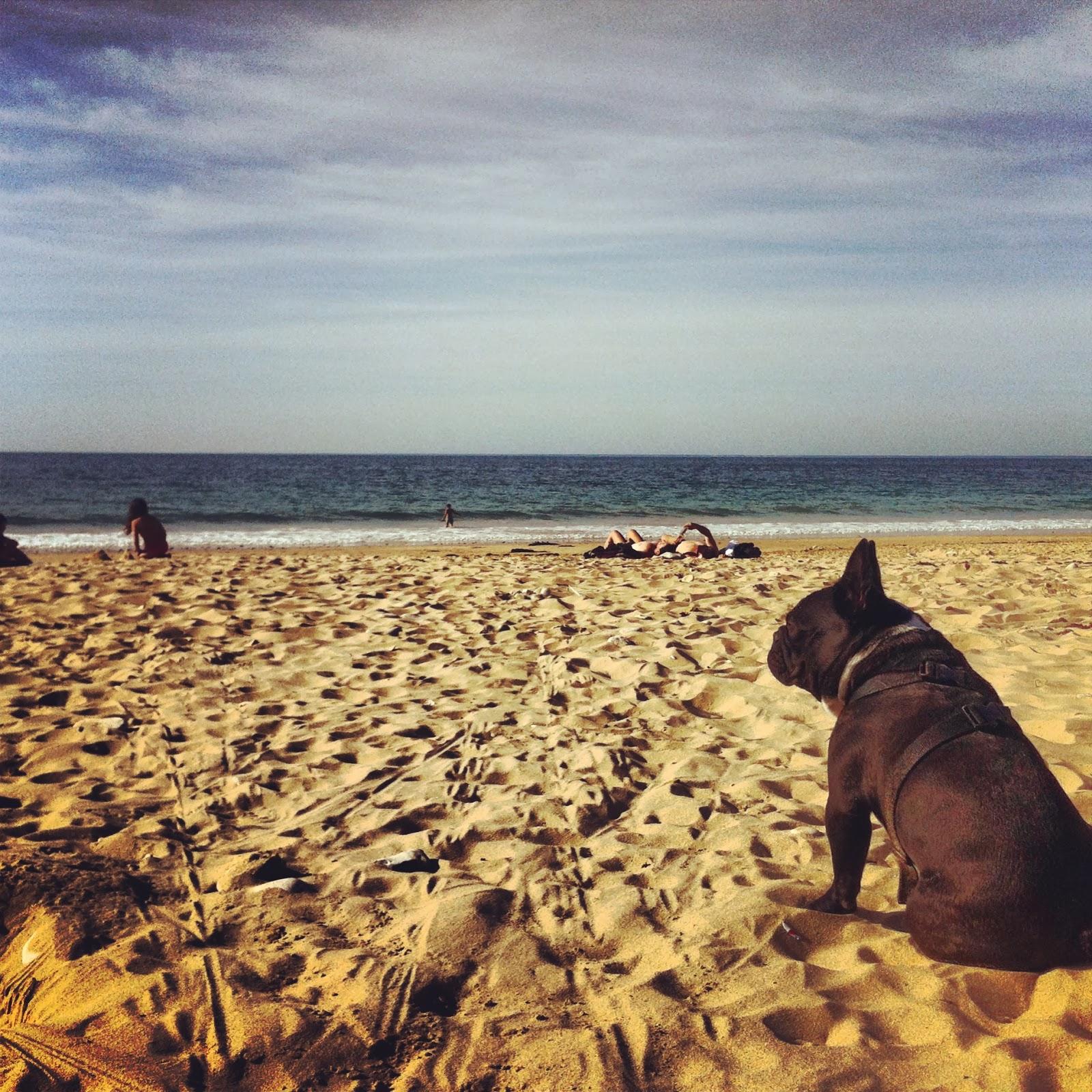 photo de la plage avec Bob notre bouledogue francais