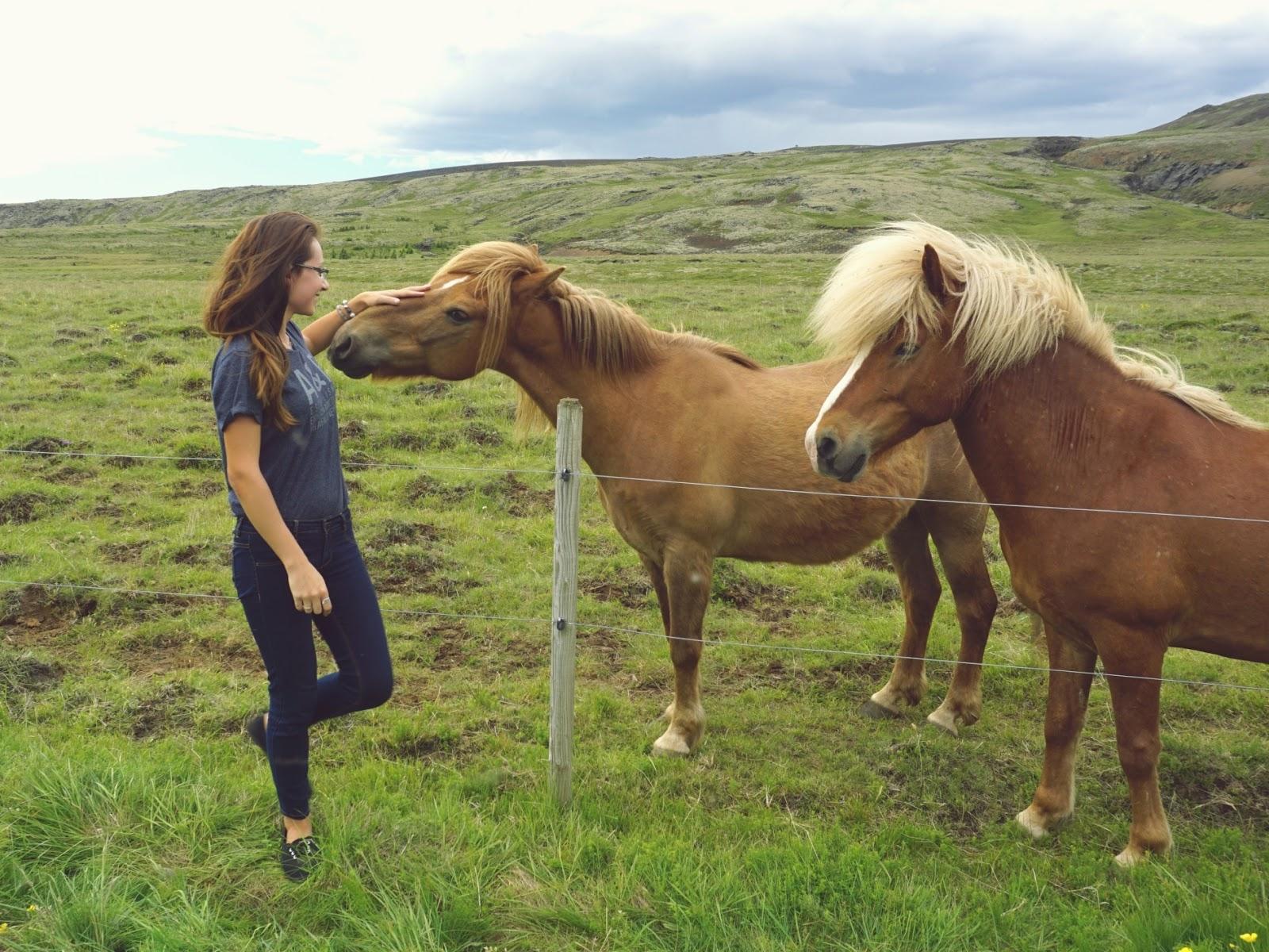konie, islandzkie konie, Islandia, islandzkie wakacje