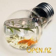 аквариум, НЕОБЫЧНОЕ