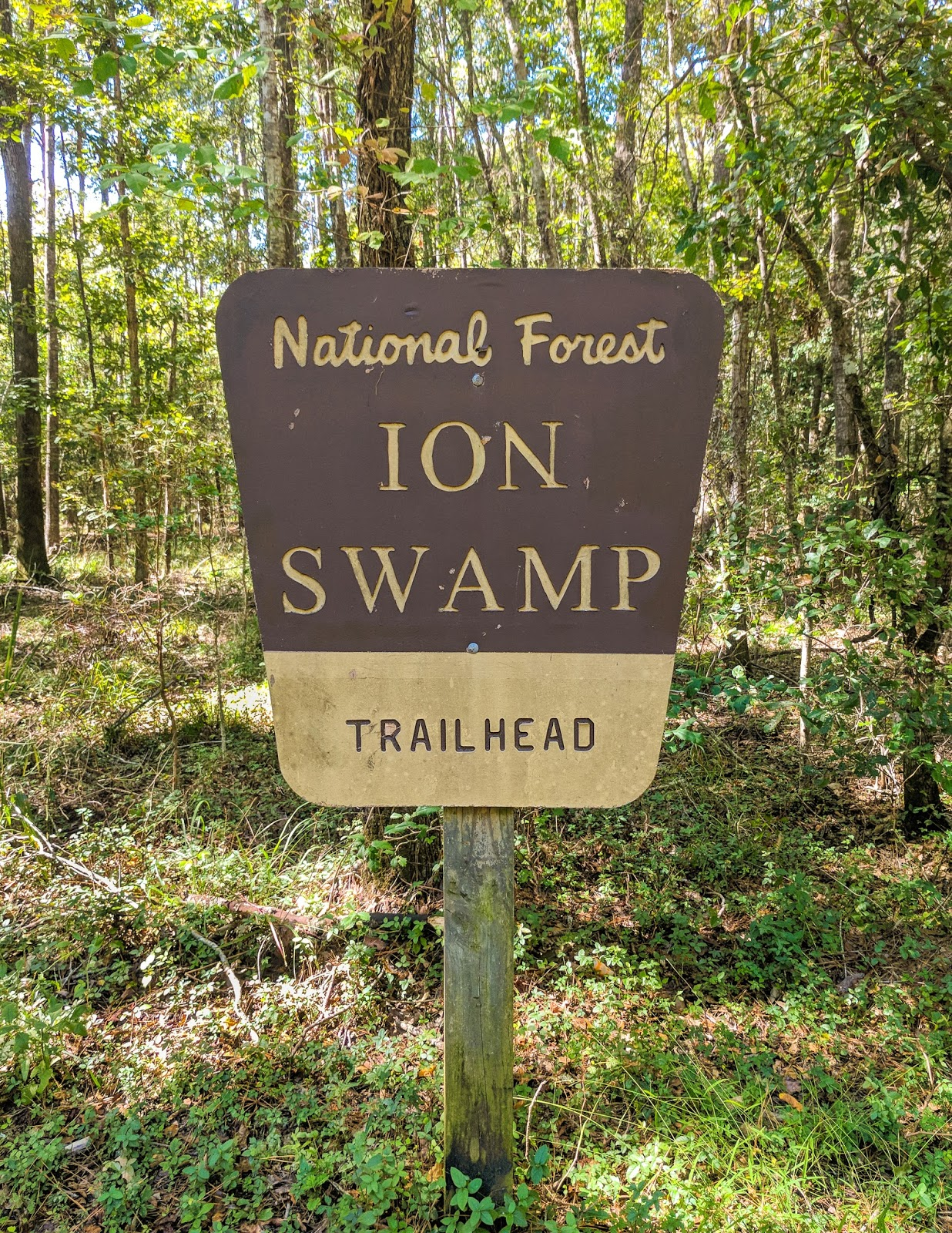 I'On Swamp Interpretive Trail Francis Marion National Forest