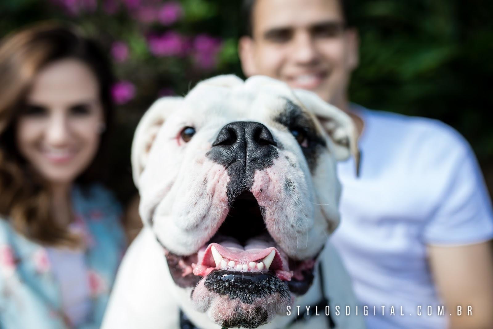 Pré Wedding com cachorro