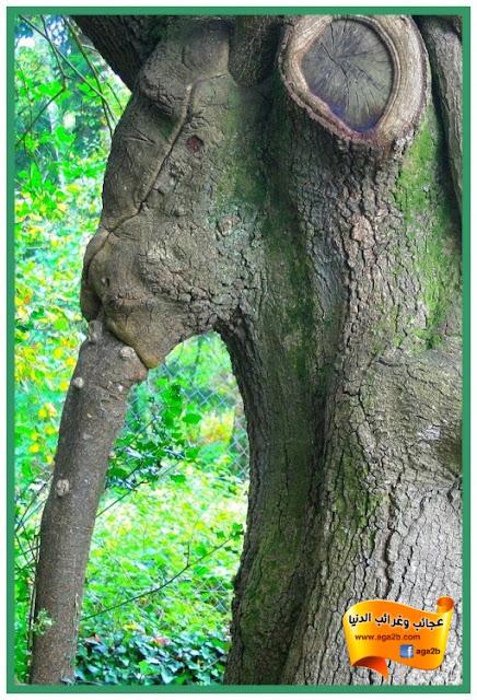 شاهد أغرب الأشجار في العالم
