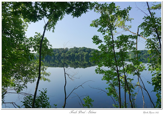 Fresh Pond: Silence
