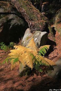 Du vert au jaune en Forêt de Fontainebleau