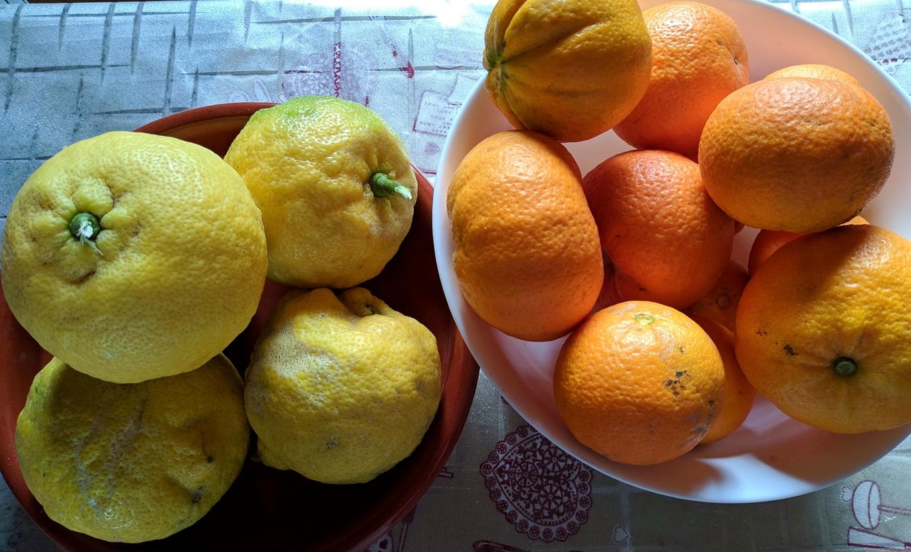 Лимоны и апельсины на Гран-Канарии