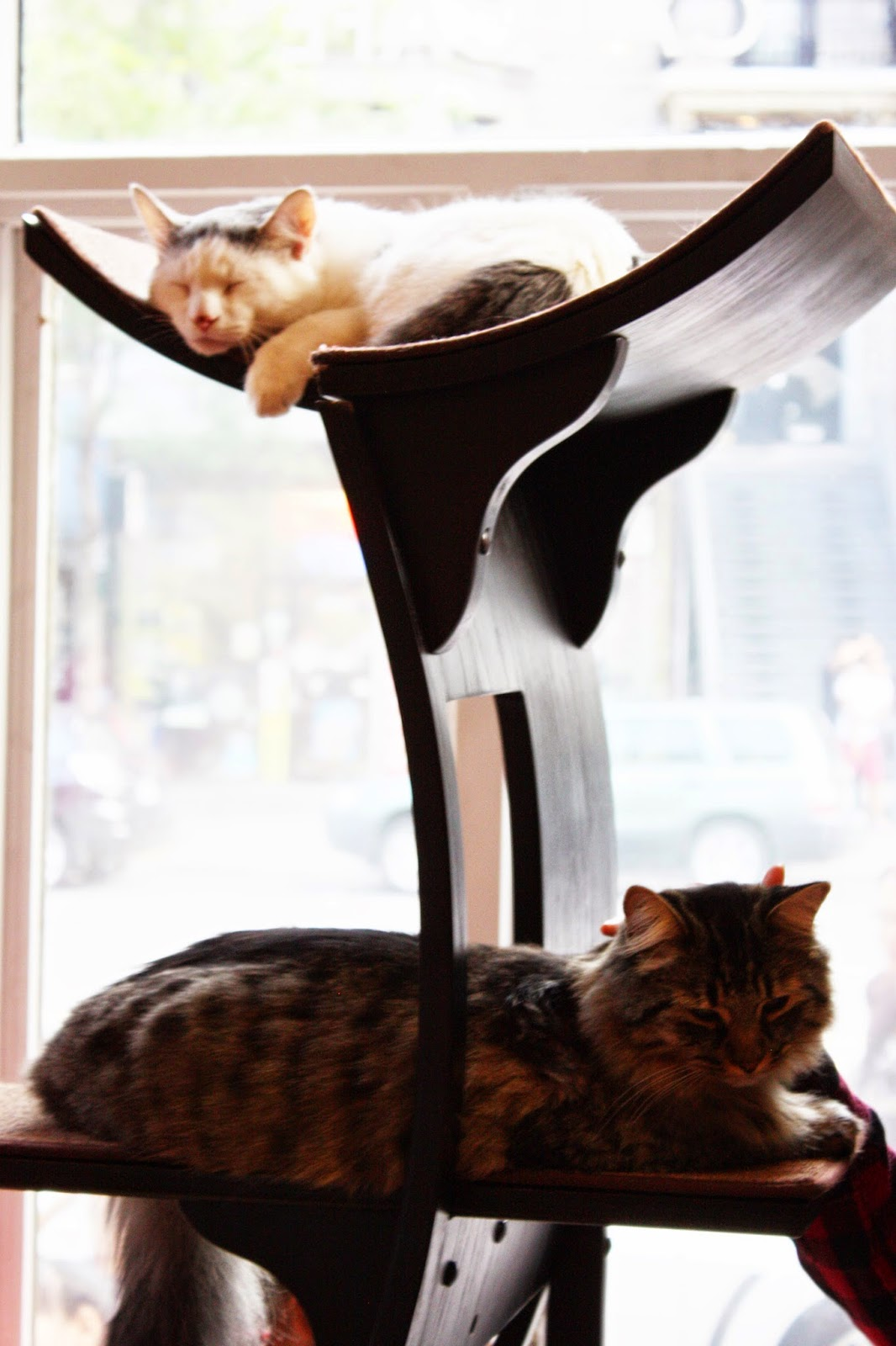 Le Cafe de Chats Cat Cafe Montreal Quebec