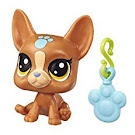 Littlest Pet Shop Series 5 Lucky Pets Fortune Cookie Boston Terrier (#No#) Pet
