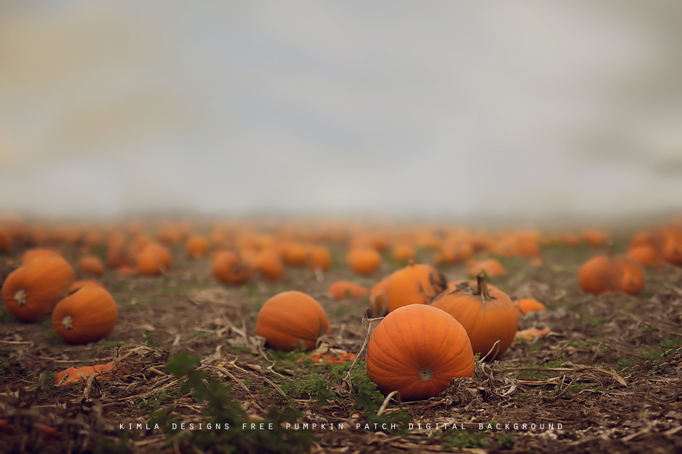 Pumpkin Patch Free Digital Background for Photographers
