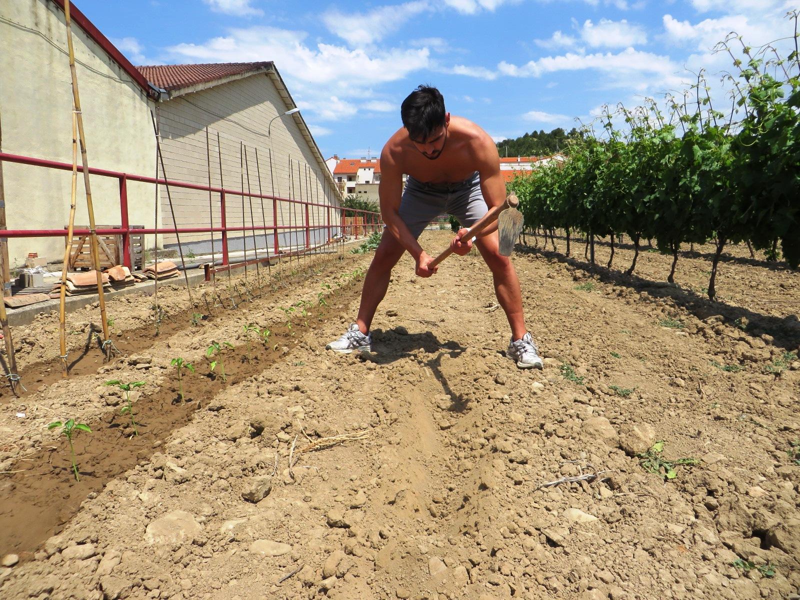Urbina Vinos Blog: Huerto de Secano (Tomates, Pimientos