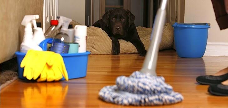 cronograma de limpeza domestica