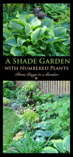 A Lovely Shade Garden