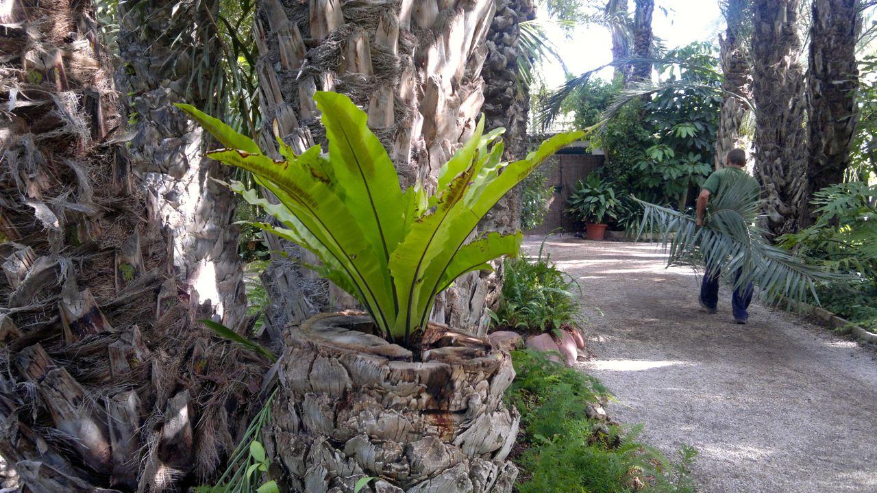 Palmulajit