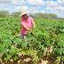 Governo do Estado anuncia reforço de R$70 milhões para a agricultura familiar baiana