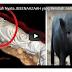 Mengerikan Sekali!! Video Jenazah yang Berubah Menjadi Babi Hutan. Ternyata Selama Hidup, Ini Yang Mayit Lakukan!