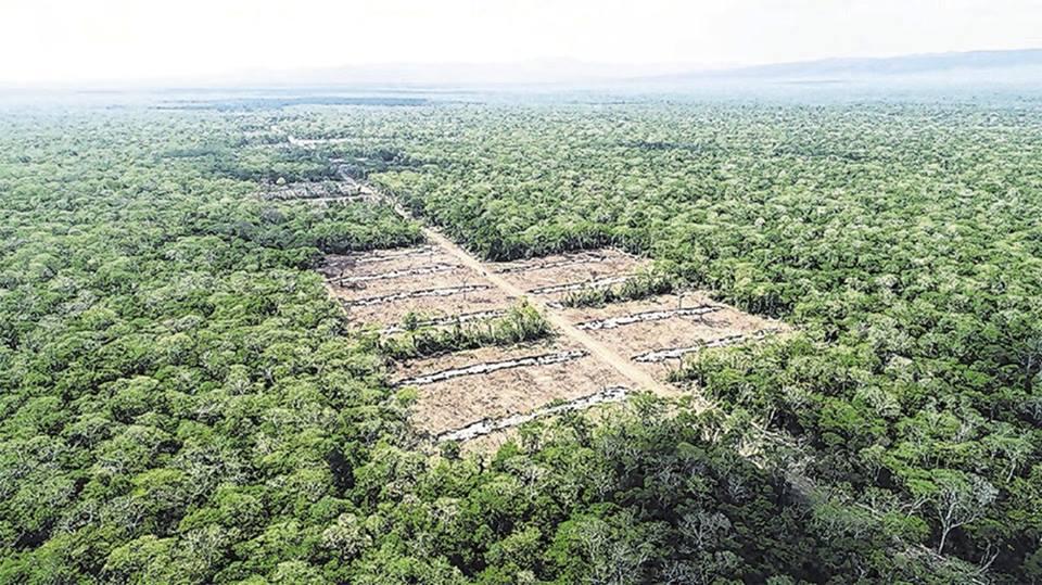 Tucabaca ya tiene parcelas y un camino de ingreso para colonos de Túpac Amaru / EL DEBER