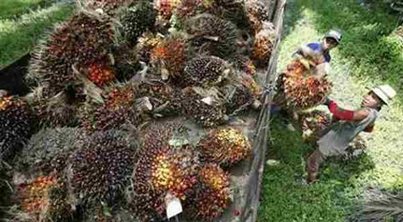 Petani kelapa sawit kuasai 45 persen kebun sawit Indonesia