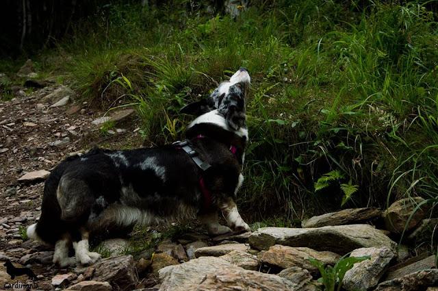 jak wyjechać z psem w góry, karkonosze z psem, podróże z psem