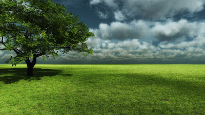 Natural Tree Wallpapers Collections