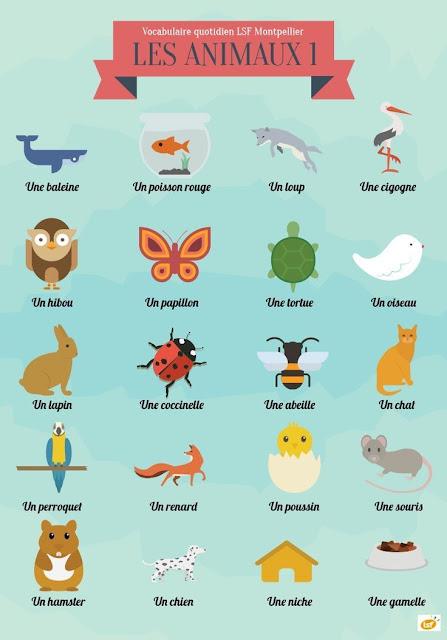 Zwierzęta - słownictwo 8 - Francuski przy kawie