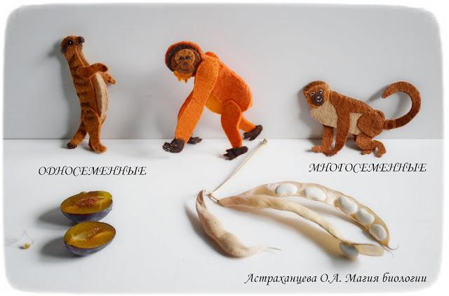 klassifikacija-plodov-mnogosemennye-odnosemennye-surikat-orangutan-martyshka