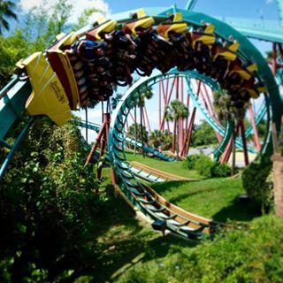Kumba - Busch Gardens Tampa Bay
