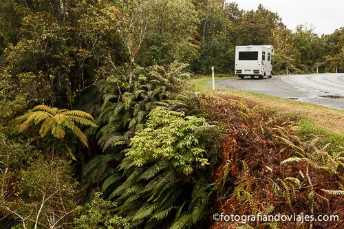 Caravana y helechos en Nueva Zelanda