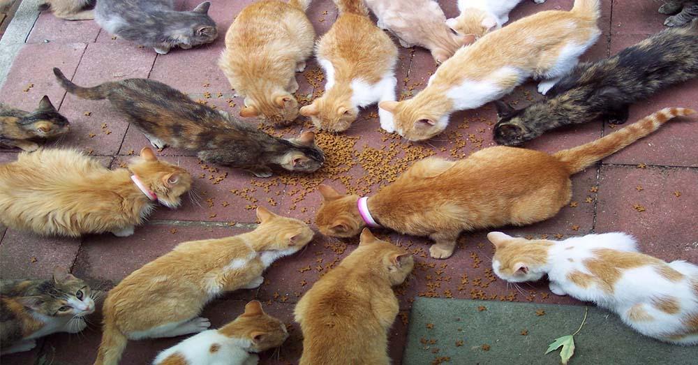 Image result for suami isteri bela kucing murah rezeki