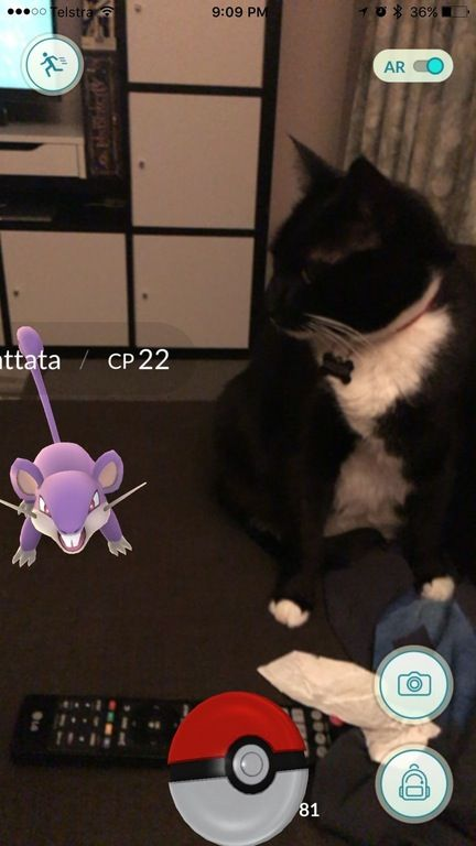 12 Really Funny Pokemon Go Pictures 2