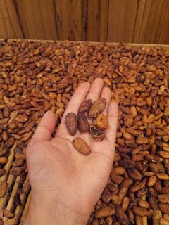 [澳洲工作假期系列] 巧克立工廠 企鵝島 2