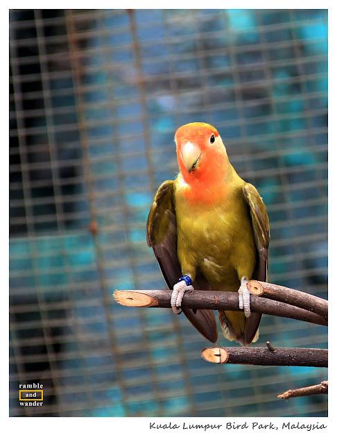 Malaysia: Kuala Lumpur Bird Park | Ramble and Wander