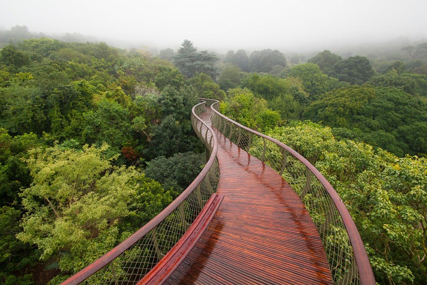 tree canopy walkway Cape Town South Africa