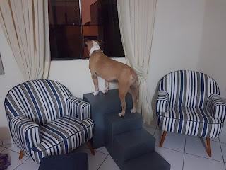 escadas panorâmicas para cães