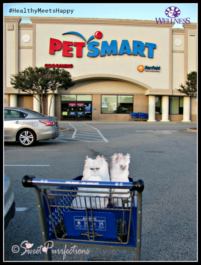 Flat Truffle and Brulee at PetSmart®