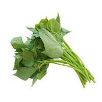manfaat pucuk daun ubi jalar