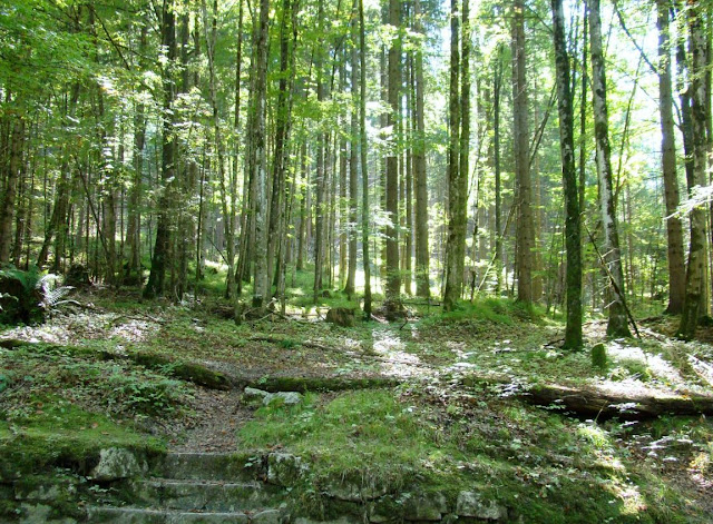 The Enchanted Forest, Oberursel, Germany