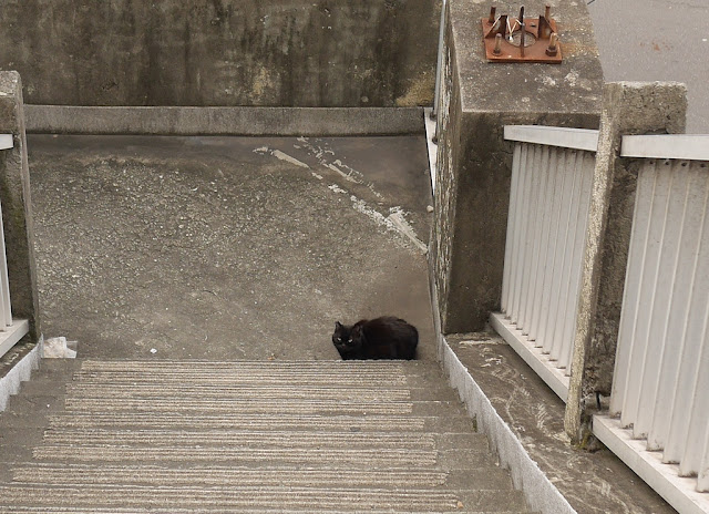 black cat on a stairway landing