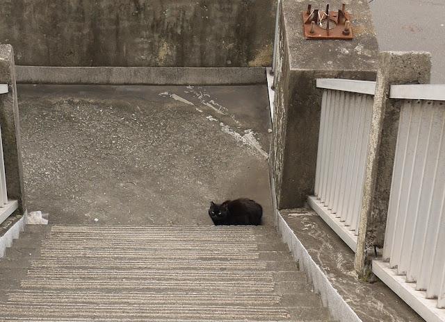 black cat on a stairway landing