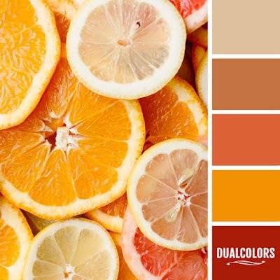 Color Paleta 16