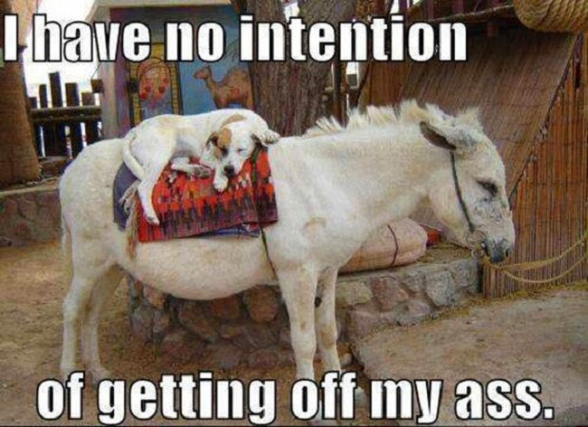 Funny Dog Ass Pun Joke Meme Picture - I have no intention of getting off my ass