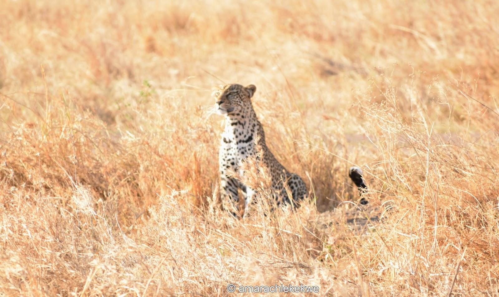 https://i1.wp.com/3.bp.blogspot.com/-wfwqKEgYoPI/WGk4Vq3ghBI/AAAAAAAAXoQ/09rJ-QMU3iAXE6z7uUCMEtyoIHbNdaIDwCLcB/s1600/leopard.jpg?resize=750%2C447&ssl=1