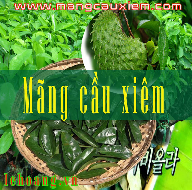 Mãng cầu Xiêm (Graviola) kháng ung thư có nhiều tại Việt Nam