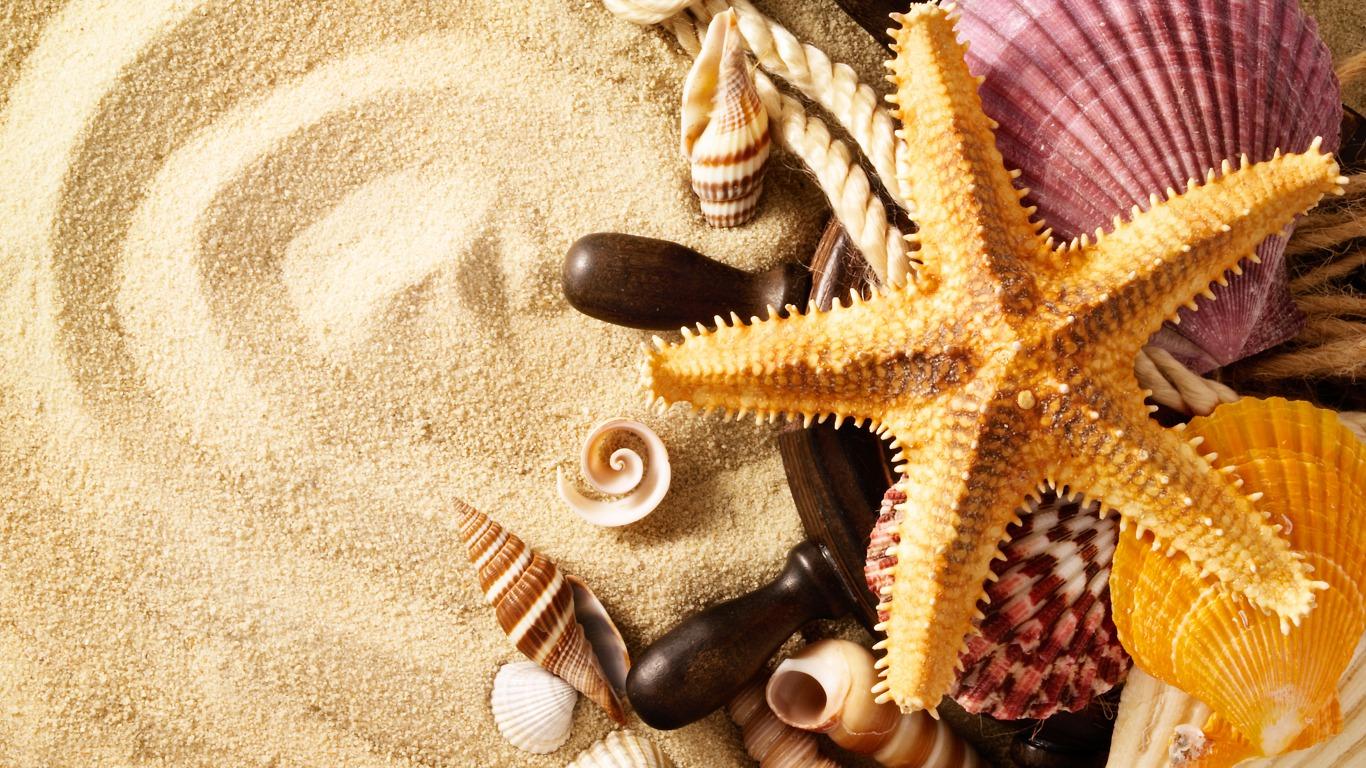 seashells wallpaper collection - photo #9
