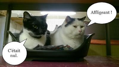 Deux jolis chats du Chat Libre de Toulouse